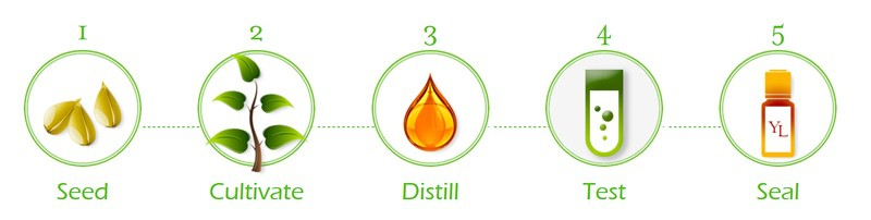 Essential Oils - From Seed to Seal
